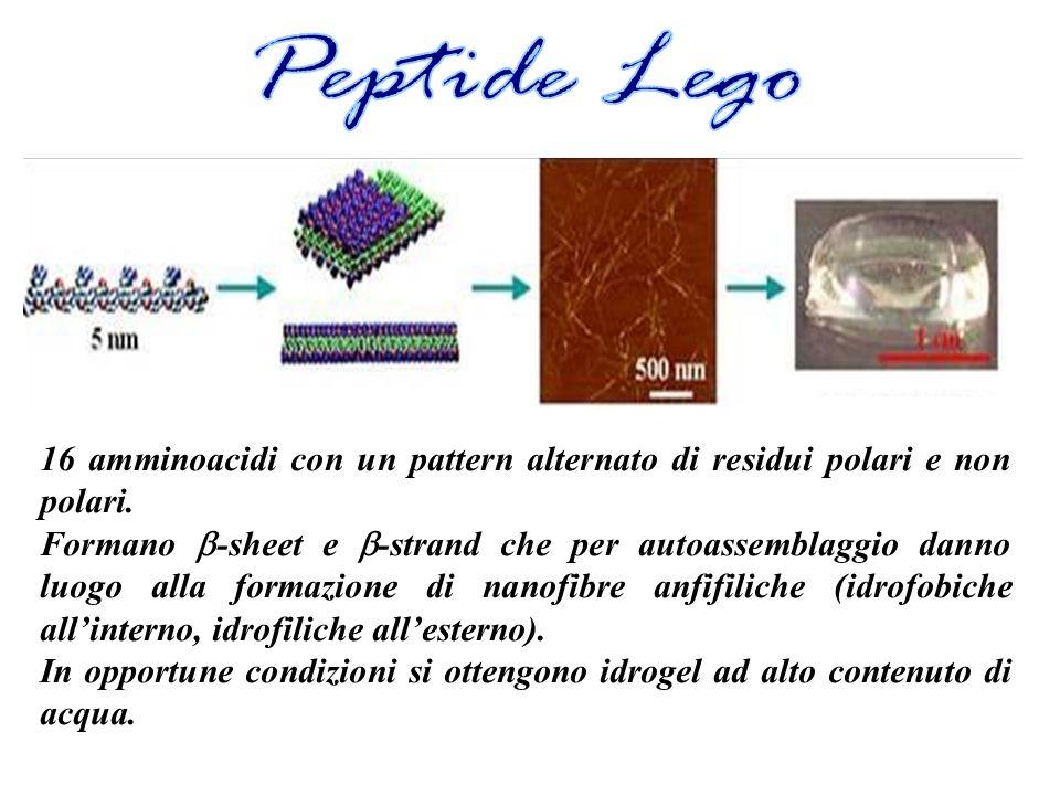 Peptide Lego 16 amminoacidi con un pattern alternato di residui polari e non polari.