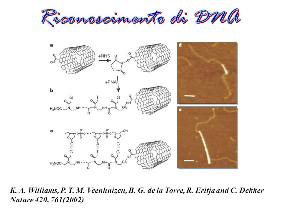 Riconoscimento di DNA K. A. Williams, P. T. M.