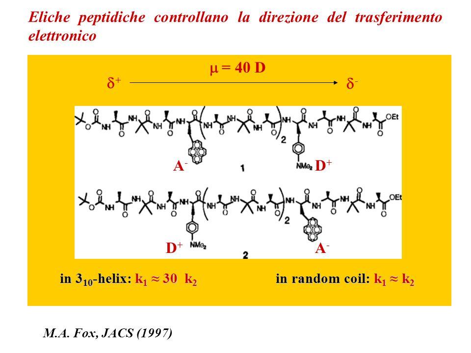 Eliche peptidiche controllano la direzione del trasferimento elettronico