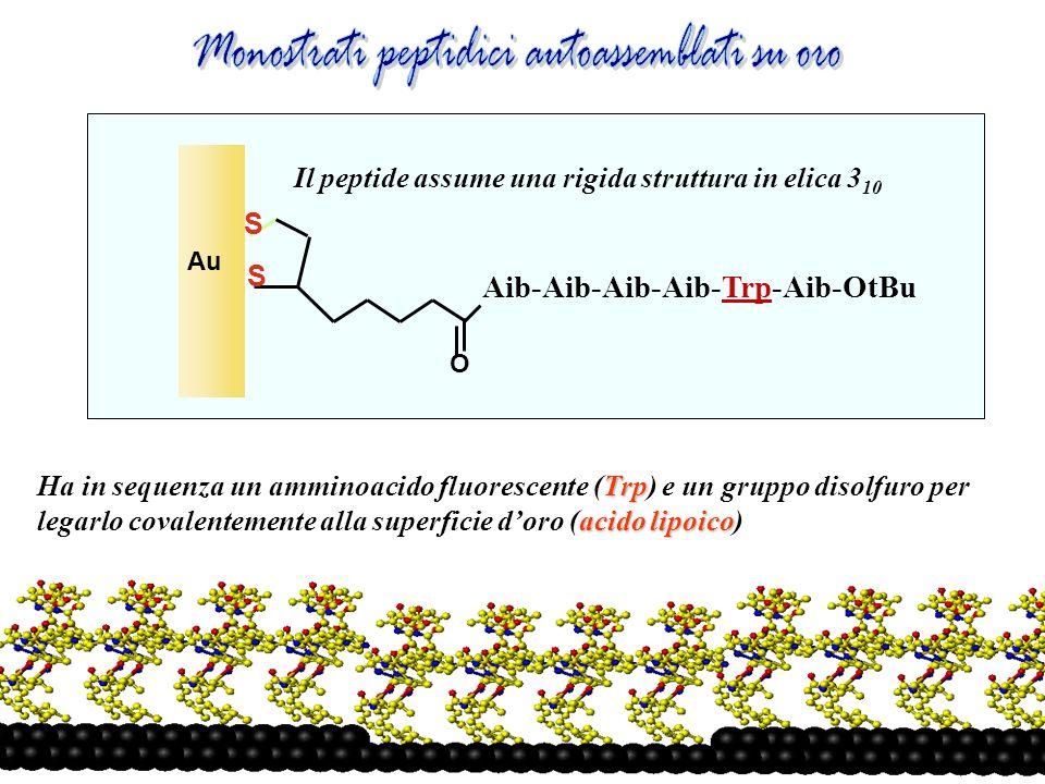 Monostrati peptidici autoassemblati su oro