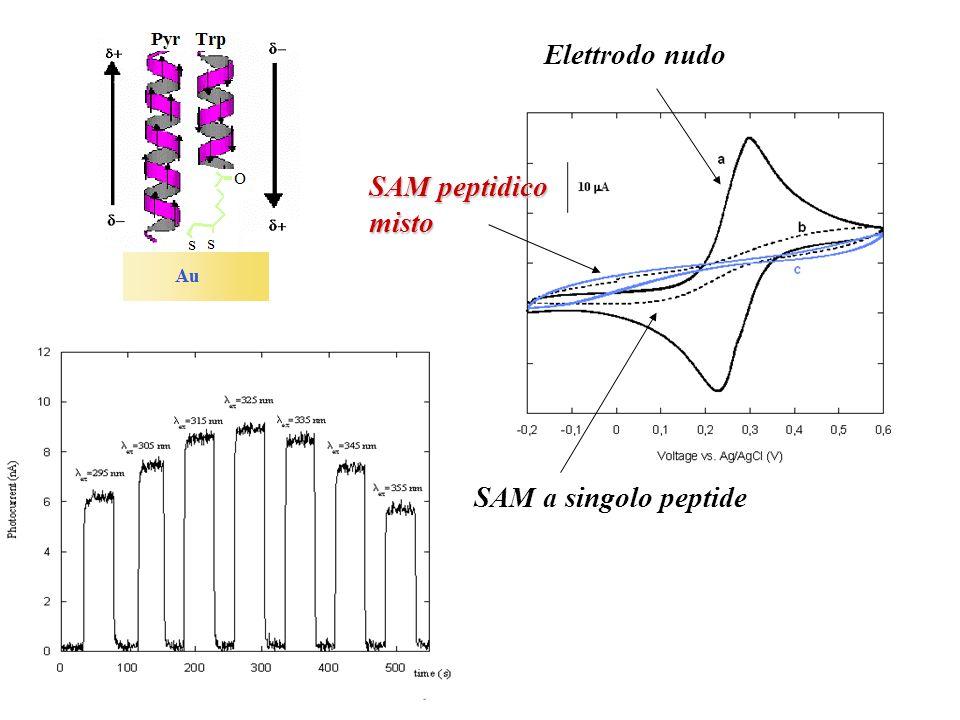Elettrodo nudo SAM peptidico misto SAM a singolo peptide