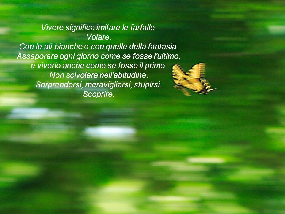 Vivere significa imitare le farfalle. Volare