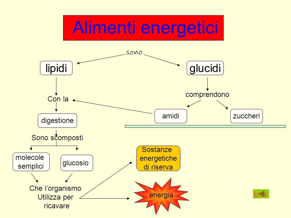 Alimenti energetici lipidi glucidi sono comprendono Con la amidi