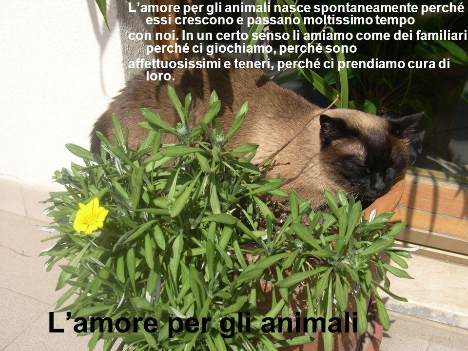 L'amore per gli animali