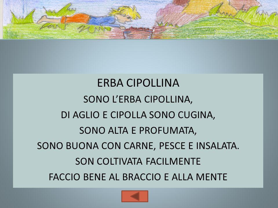ERBA CIPOLLINA SONO L'ERBA CIPOLLINA, DI AGLIO E CIPOLLA SONO CUGINA,