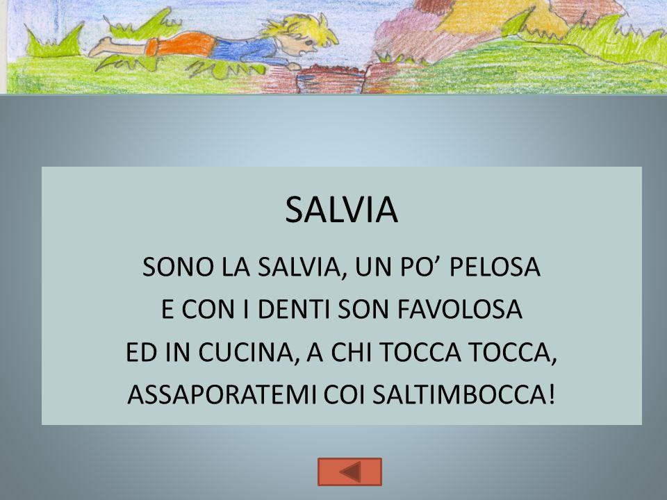 SALVIASONO LA SALVIA, UN PO' PELOSA E CON I DENTI SON FAVOLOSA ED IN CUCINA, A CHI TOCCA TOCCA, ASSAPORATEMI COI SALTIMBOCCA.