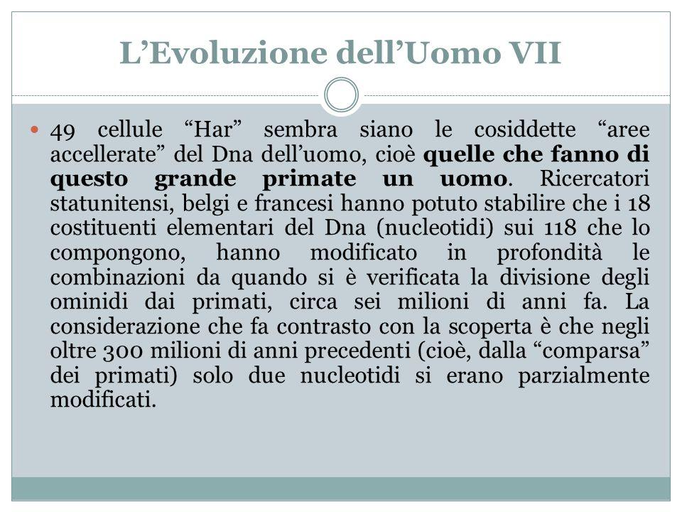 L'Evoluzione dell'Uomo VII