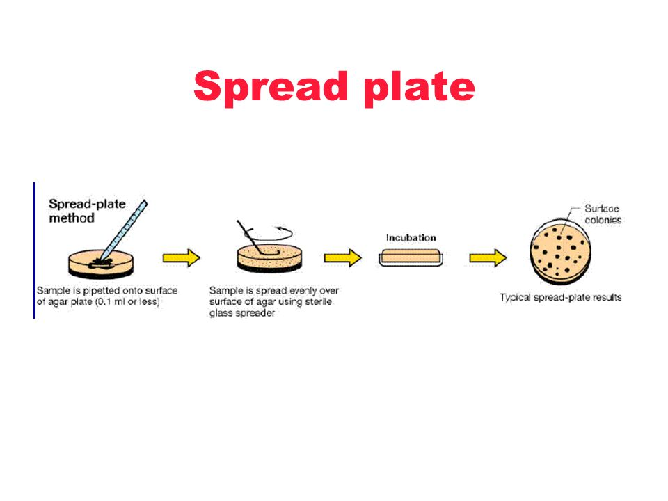Spread plate