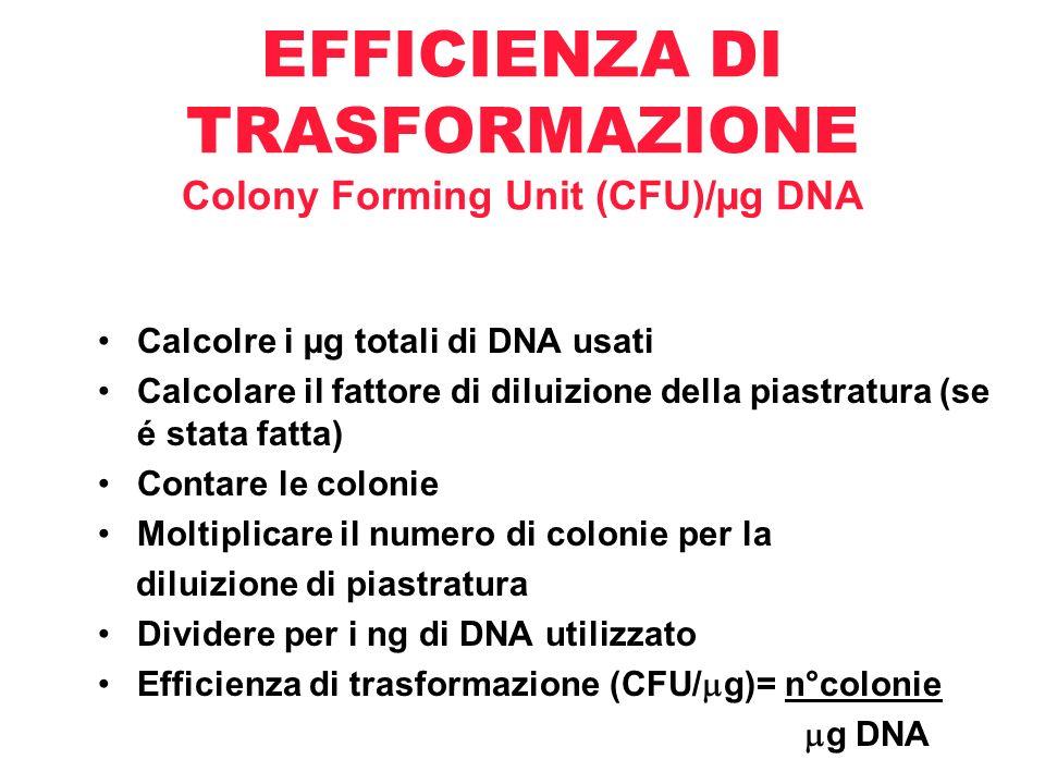 EFFICIENZA DI TRASFORMAZIONE Colony Forming Unit (CFU)/µg DNA