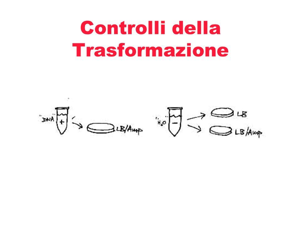 Controlli della Trasformazione