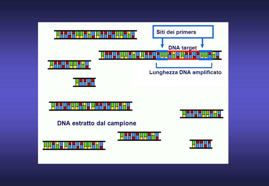 DNA estratto dal campione