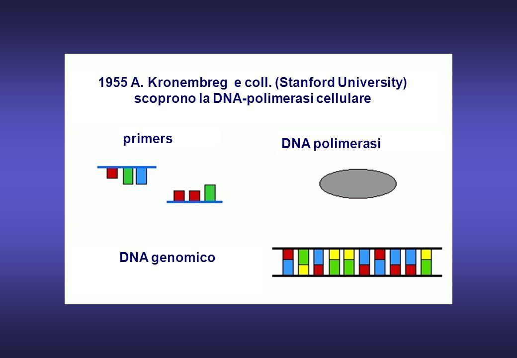 1955 A. Kronembreg e coll. (Stanford University)