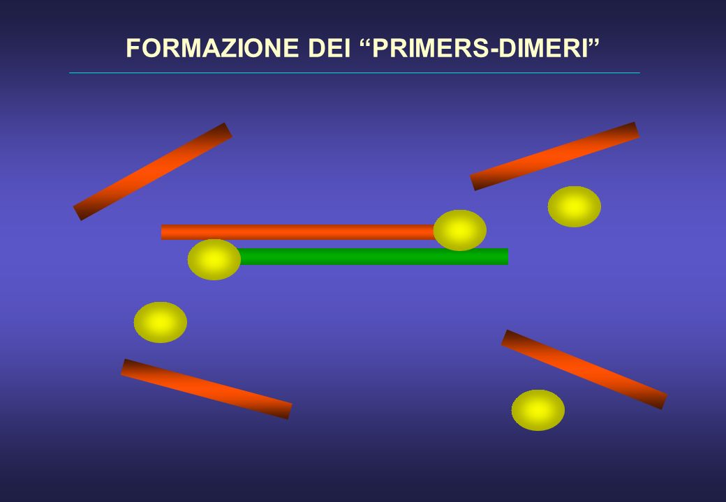 FORMAZIONE DEI PRIMERS-DIMERI