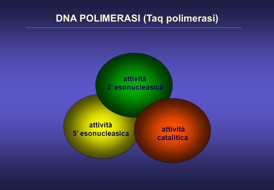 DNA POLIMERASI (Taq polimerasi)
