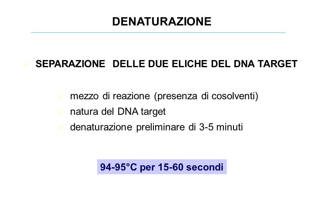SEPARAZIONE DELLE DUE ELICHE DEL DNA TARGET