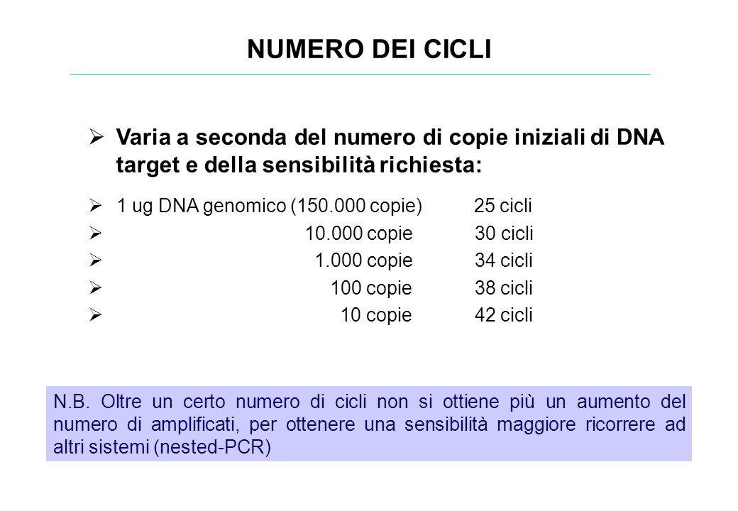 NUMERO DEI CICLI Varia a seconda del numero di copie iniziali di DNA target e della sensibilità richiesta:
