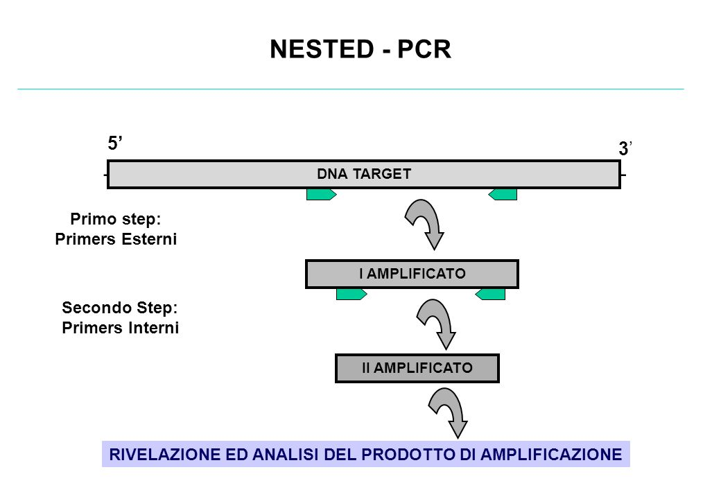 NESTED - PCR - 5' 3' Primo step: Primers Esterni Secondo Step: