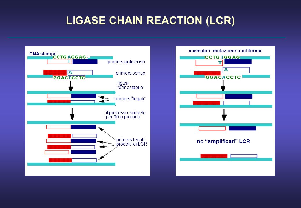 LIGASE CHAIN REACTION (LCR) mismatch: mutazione puntiforme