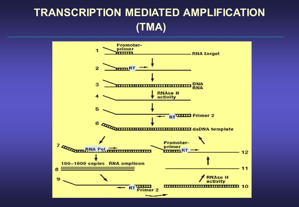 TRANSCRIPTION MEDIATED AMPLIFICATION