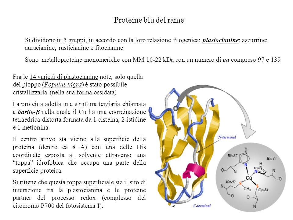 Proteine blu del rame