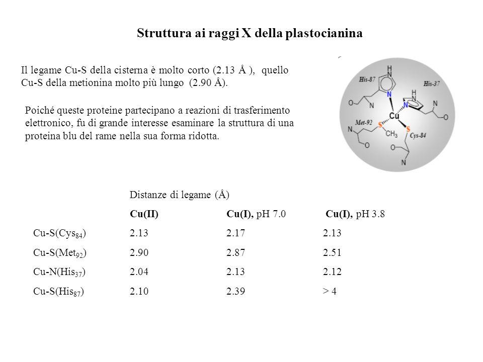 Struttura ai raggi X della plastocianina