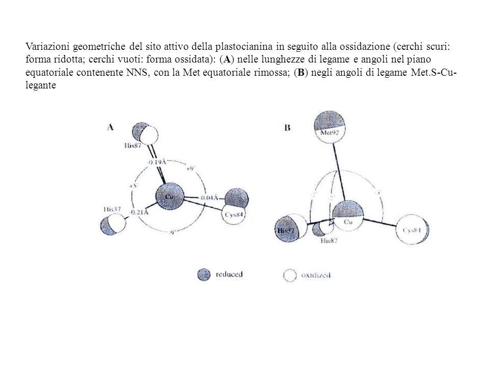 Variazioni geometriche del sito attivo della plastocianina in seguito alla ossidazione (cerchi scuri: forma ridotta; cerchi vuoti: forma ossidata): (A) nelle lunghezze di legame e angoli nel piano equatoriale contenente NNS, con la Met equatoriale rimossa; (B) negli angoli di legame Met.S-Cu-legante