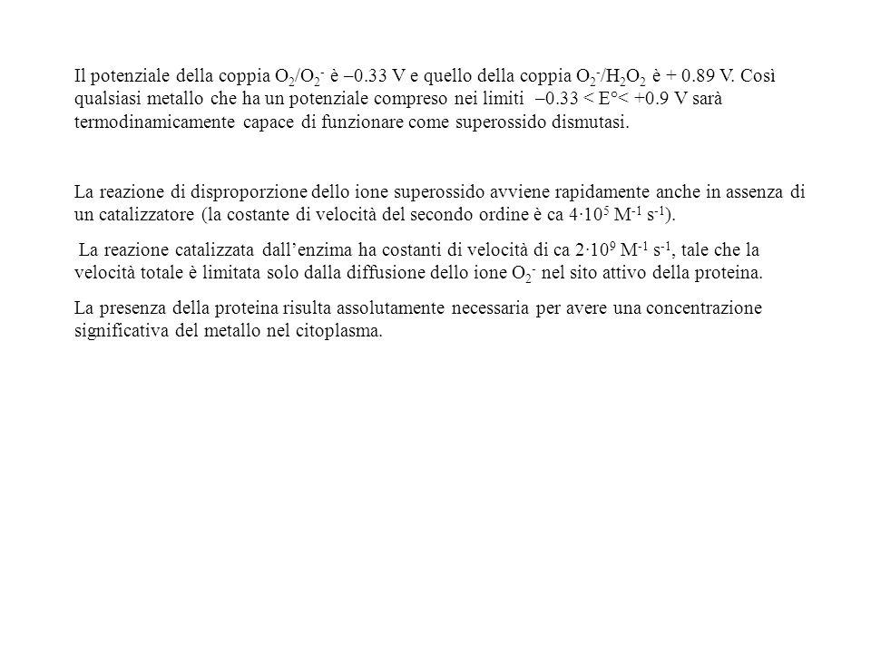 Il potenziale della coppia O2/O2- è –0