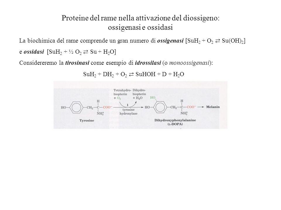 Proteine del rame nella attivazione del diossigeno: ossigenasi e ossidasi