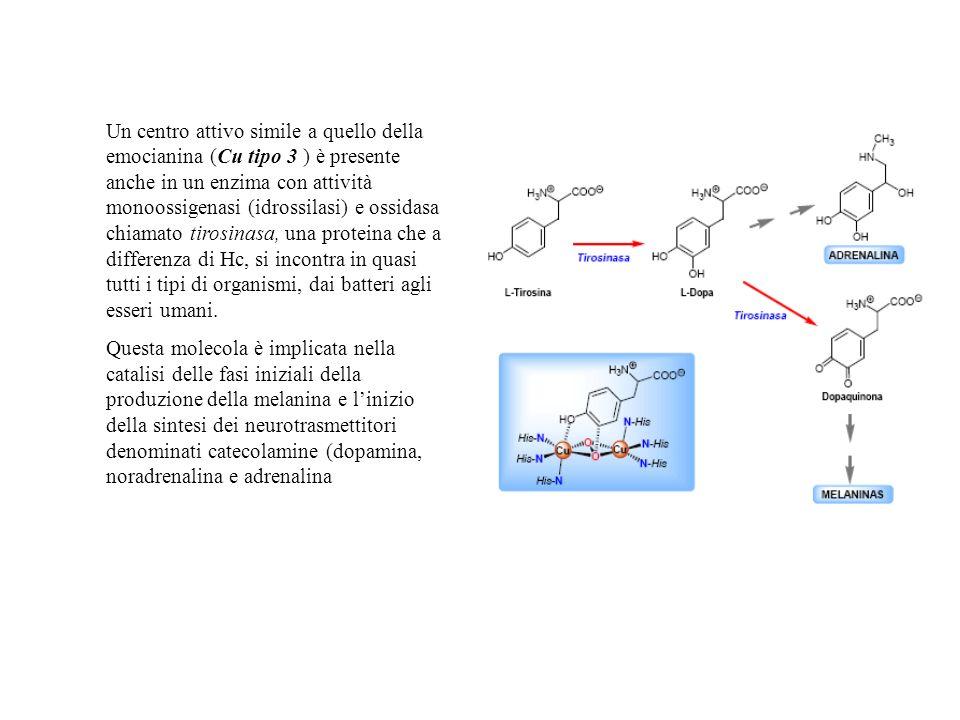 Un centro attivo simile a quello della emocianina (Cu tipo 3 ) è presente anche in un enzima con attività monoossigenasi (idrossilasi) e ossidasa chiamato tirosinasa, una proteina che a differenza di Hc, si incontra in quasi tutti i tipi di organismi, dai batteri agli esseri umani.