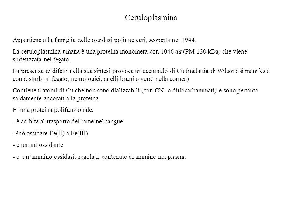 Ceruloplasmina Appartiene alla famiglia delle ossidasi polinucleari, scoperta nel 1944.