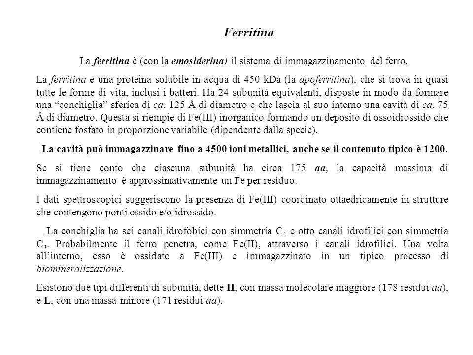 Ferritina La ferritina è (con la emosiderina) il sistema di immagazzinamento del ferro.