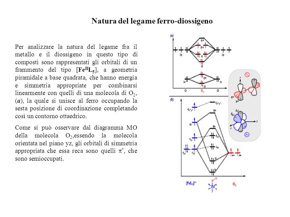 Natura del legame ferro-diossigeno