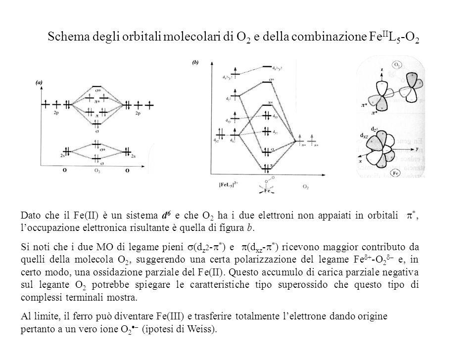 Schema degli orbitali molecolari di O2 e della combinazione FeIIL5-O2
