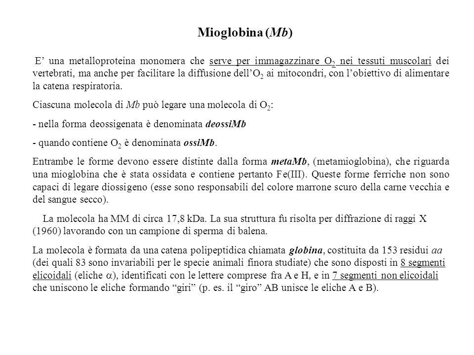 Mioglobina (Mb)