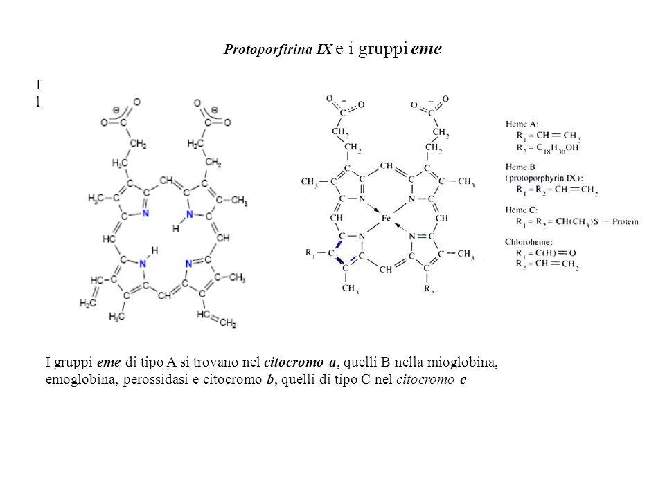 Protoporfirina IX e i gruppi eme