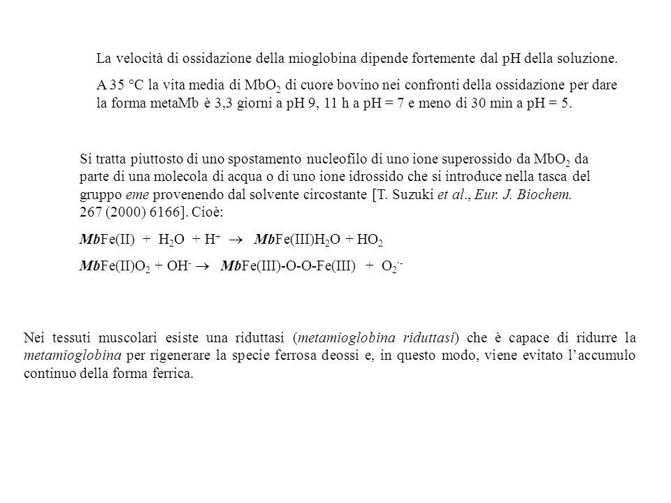 La velocità di ossidazione della mioglobina dipende fortemente dal pH della soluzione.