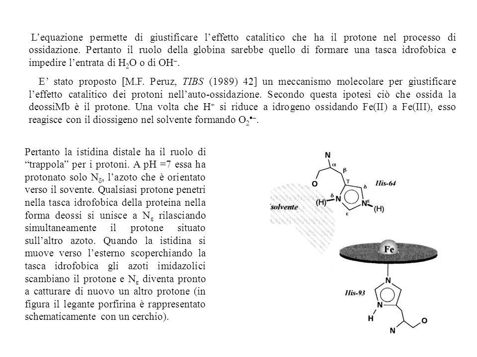 L'equazione permette di giustificare l'effetto catalitico che ha il protone nel processo di ossidazione. Pertanto il ruolo della globina sarebbe quello di formare una tasca idrofobica e impedire l'entrata di H2O o di OH.