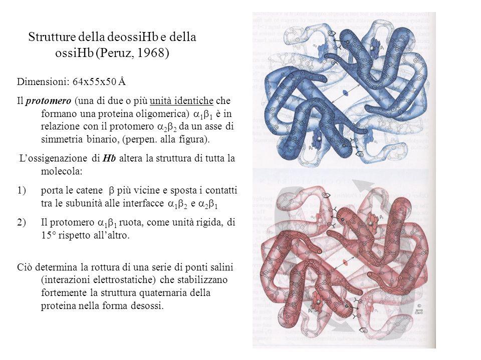 Strutture della deossiHb e della ossiHb (Peruz, 1968)
