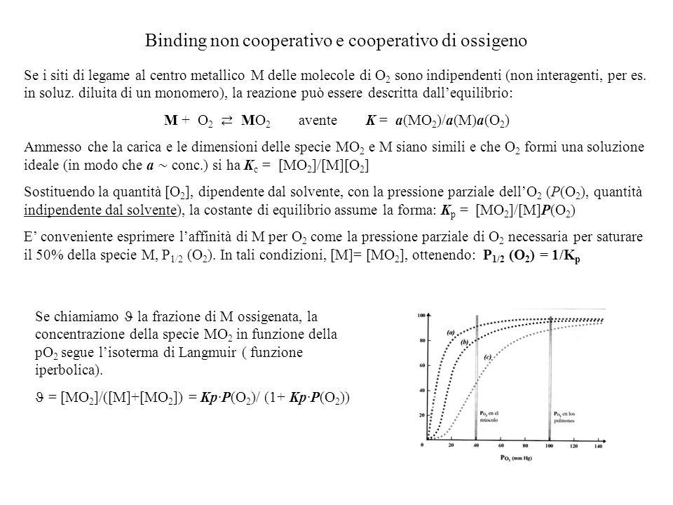 Binding non cooperativo e cooperativo di ossigeno