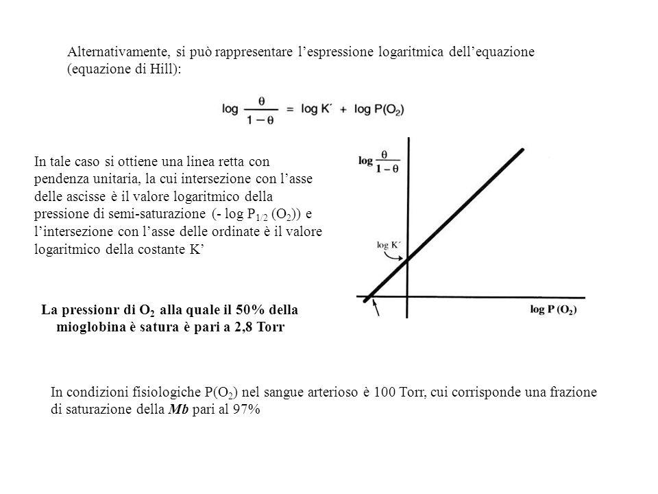 Alternativamente, si può rappresentare l'espressione logaritmica dell'equazione (equazione di Hill):