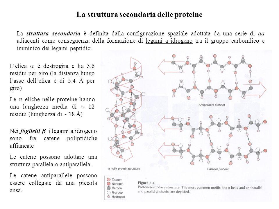 La struttura secondaria delle proteine