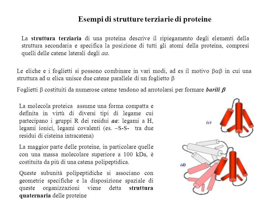 Esempi di strutture terziarie di proteine
