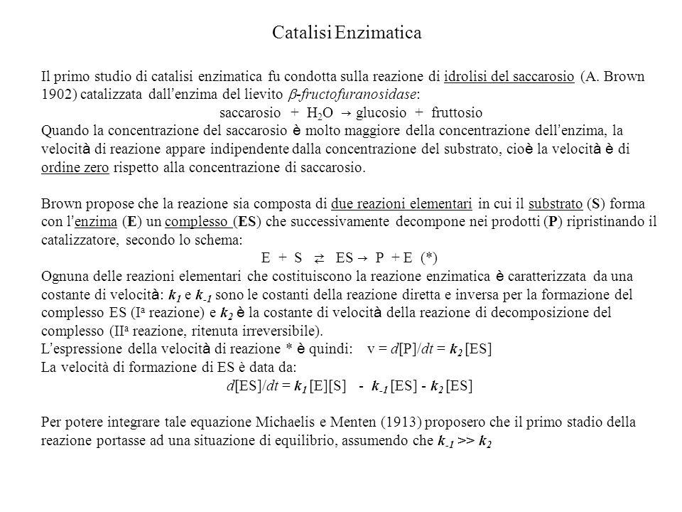 Catalisi Enzimatica