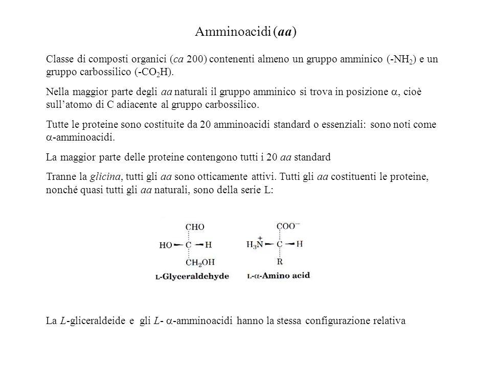 Amminoacidi (aa) Classe di composti organici (ca 200) contenenti almeno un gruppo amminico (-NH2) e un gruppo carbossilico (-CO2H).