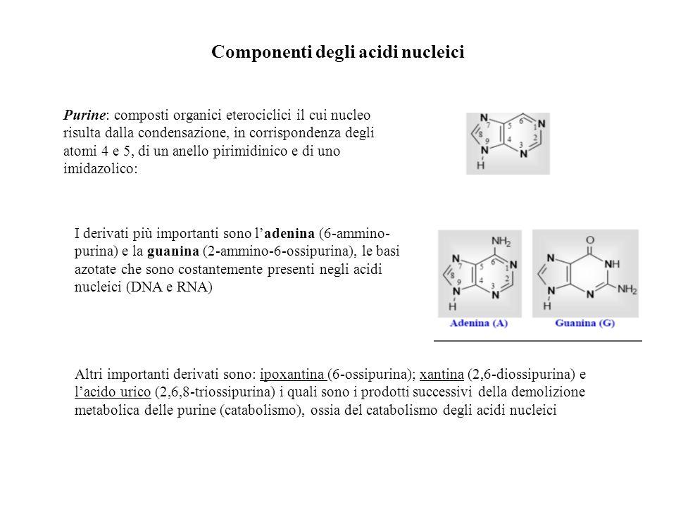 Componenti degli acidi nucleici