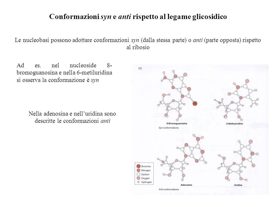 Conformazioni syn e anti rispetto al legame glicosidico