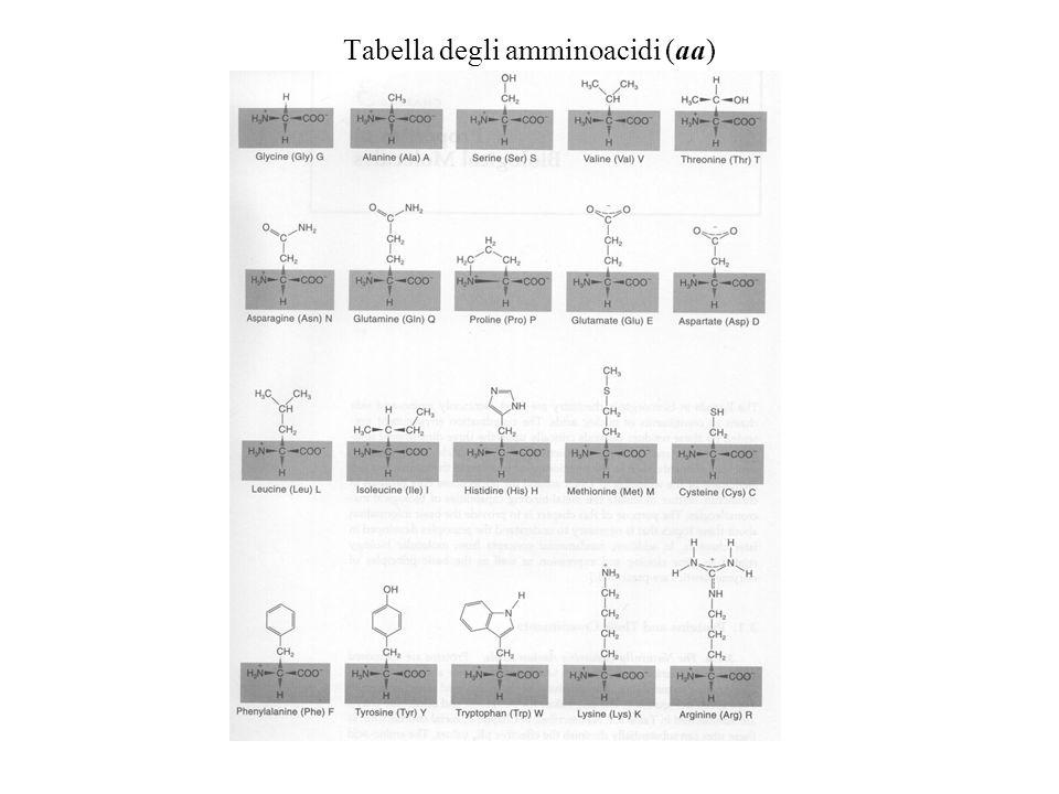 Tabella degli amminoacidi (aa)