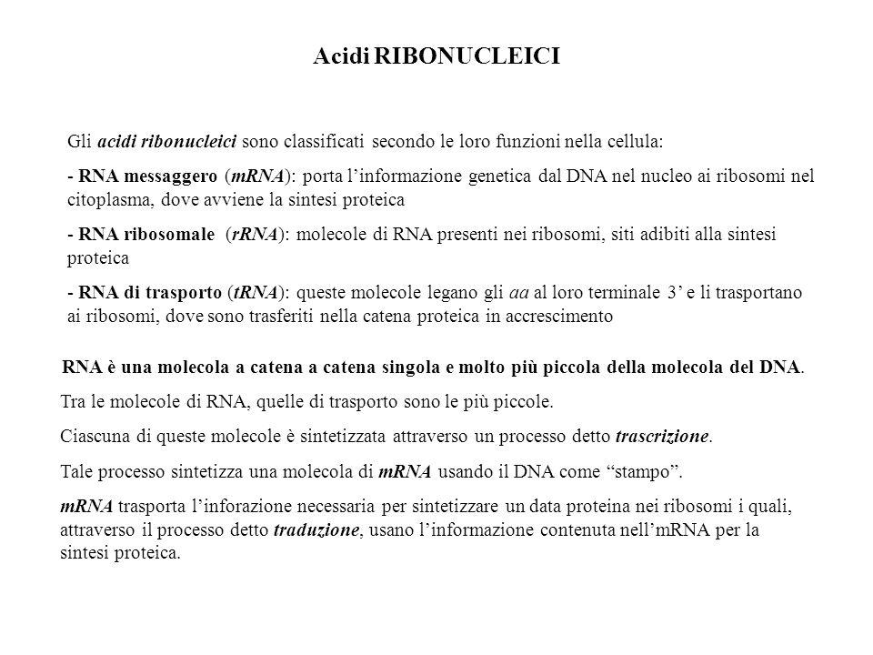 Acidi RIBONUCLEICI Gli acidi ribonucleici sono classificati secondo le loro funzioni nella cellula: