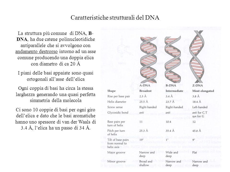 Caratteristiche strutturali del DNA
