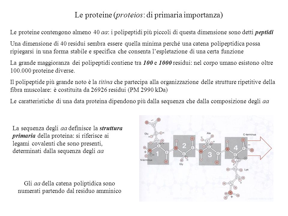 Le proteine (proteios: di primaria importanza)